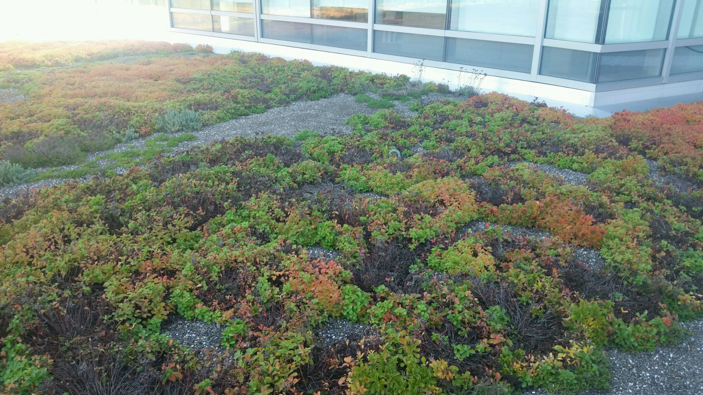 Blue cross roof_green infrastructure_rhode island_photo by David Gerraughty