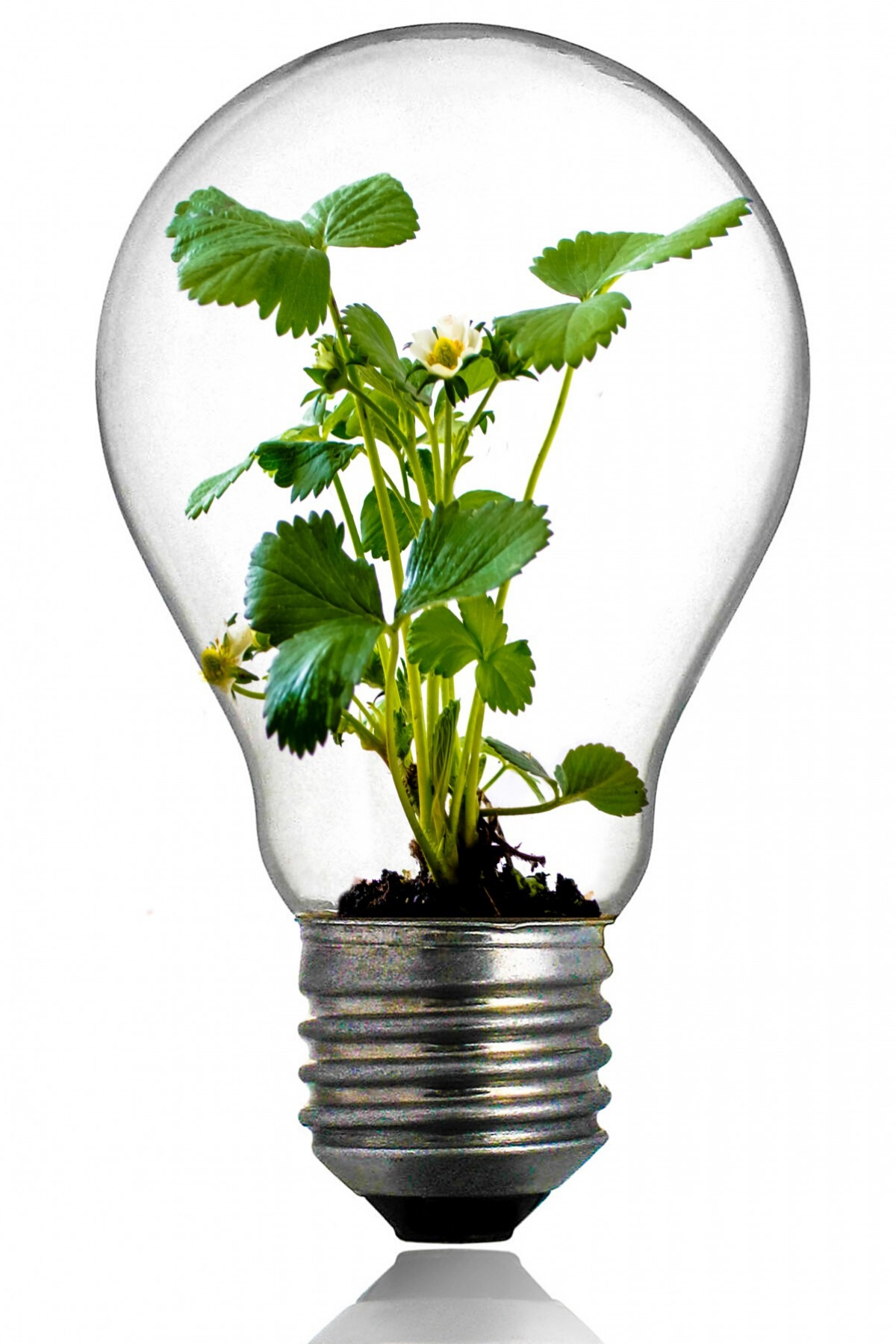 NJ_Lightbulb Canva
