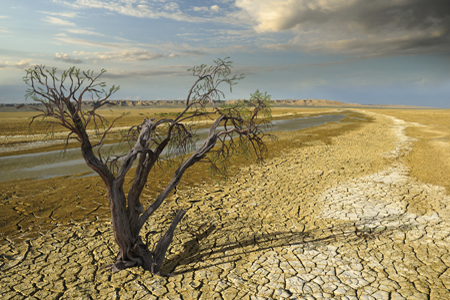 Parched land, tree. Photo credit: draco-zlat / iStock