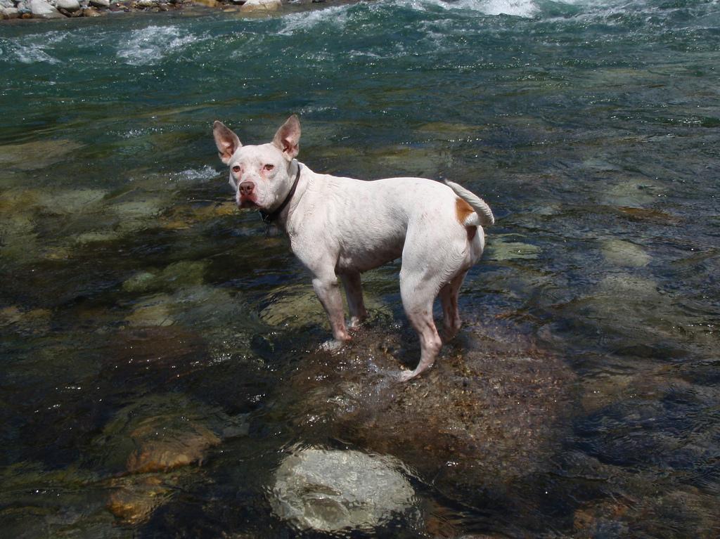 a dog in a river / photo: flickr.com/isthmene CC