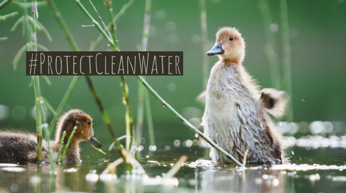 Wildlife 1 -- Clean Water Week.jpg