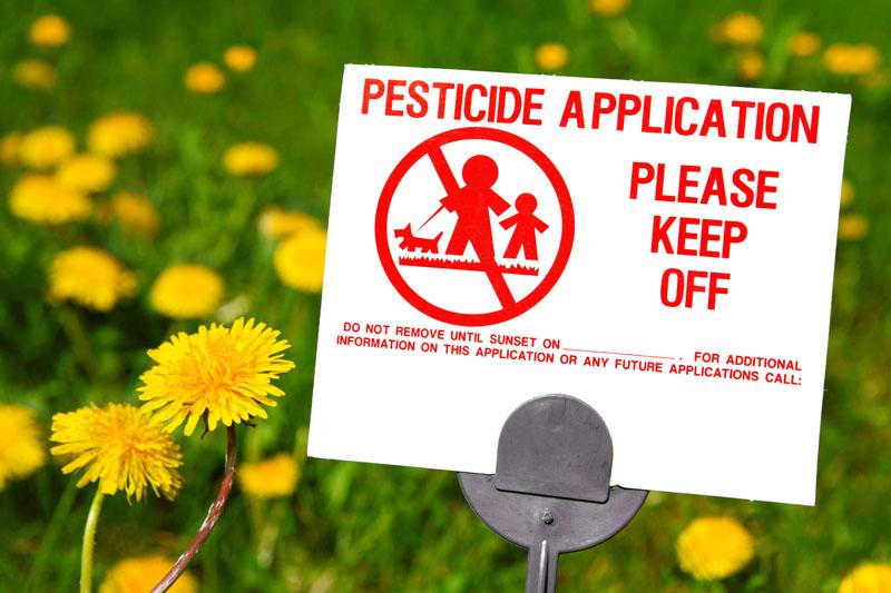 Pesticide application sign, field of dandelions