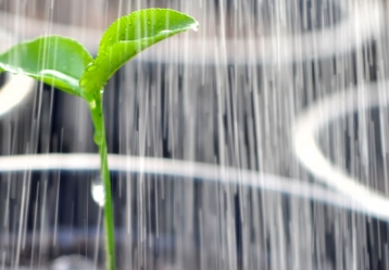 Watering a plant