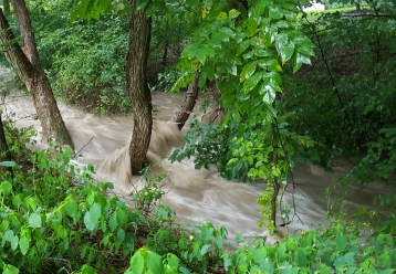 A stream in Howard County during a rain storm.