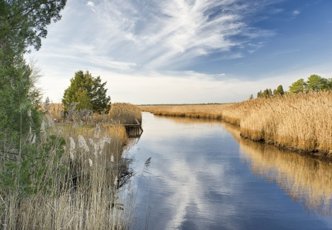 water_NJ_Pinelands_Small_Stream_Wetlands_450x299.jpg