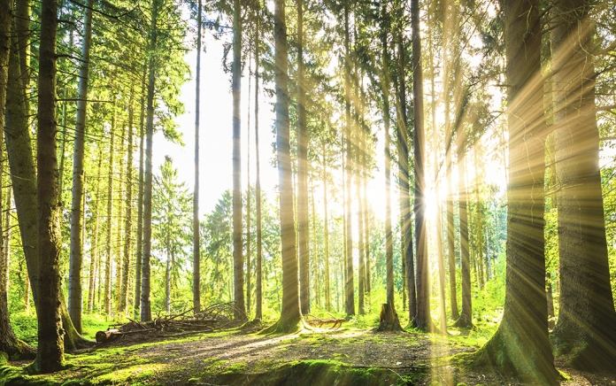 Forest with sunshine, photo: istock