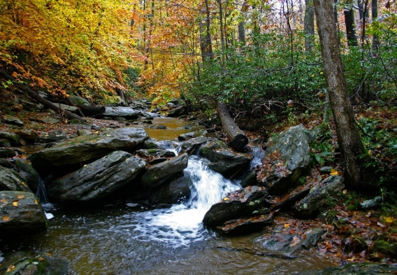 Stream in a forest during fall